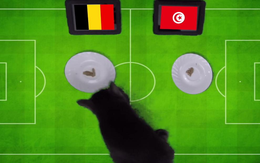 Tiên tri Cass dự đoán Bỉ vs Tunisia, 19h ngày 23/6