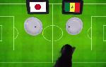 Tiên tri Cass dự đoán Nhật Bản vs Senegal, 22h ngày 24/6